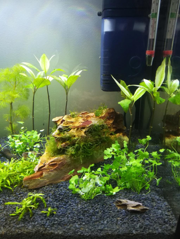 70L premier aquarium Img_2017