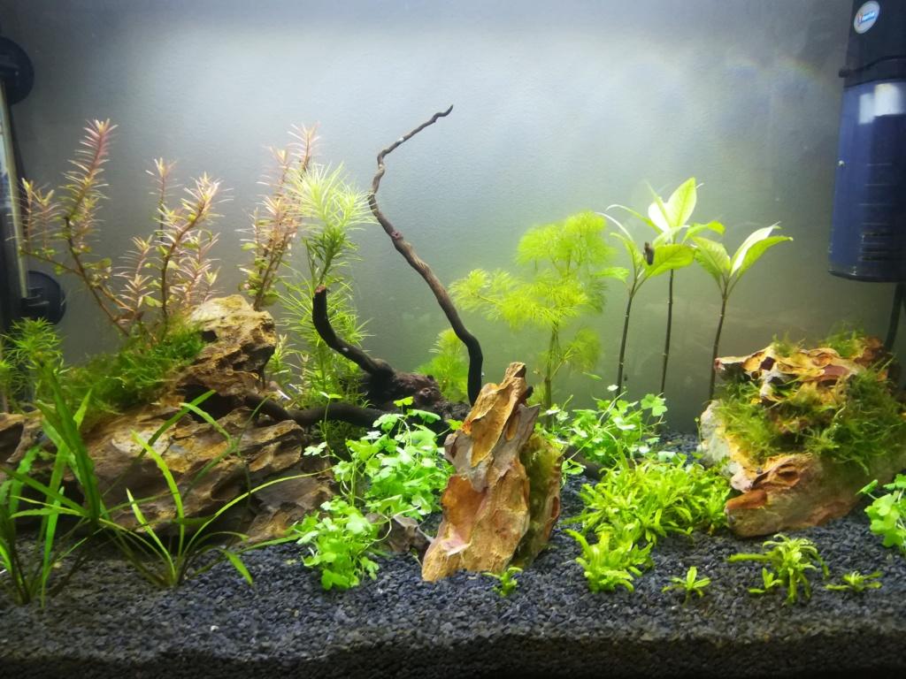 70L premier aquarium Img_2018