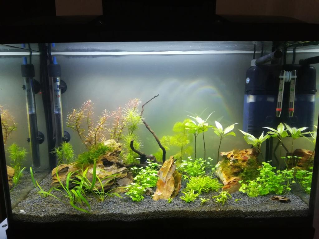 70L premier aquarium - Page 2 Img_2019