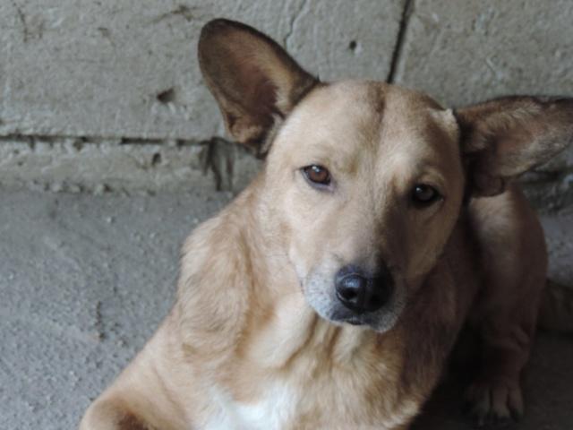 NIKKO, né en 2014 sauvé de l'équarrissage en décembre 2017-marrainée par Célia78 - R-SC-SOS 43139610