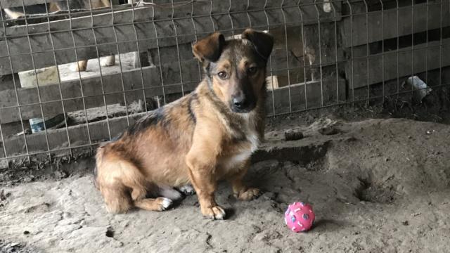 NOUKI , né en 2015 sauvé de l'équarrissage de Bragadiru en Déc 2017- Parrainé par Estelle Vds-R-SC-SOS Img_1616