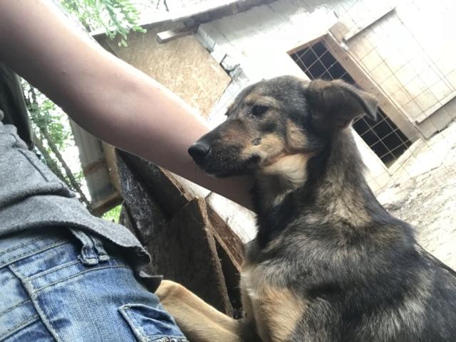 taliya - TALIYA -NEE LE 10/09/2017, soeur de Nami et Ouzo, trouvée dans le rue par Lenuta-(EN FA dept 42)- Marrainée par Karst -R-SOS-30MA Img_1654