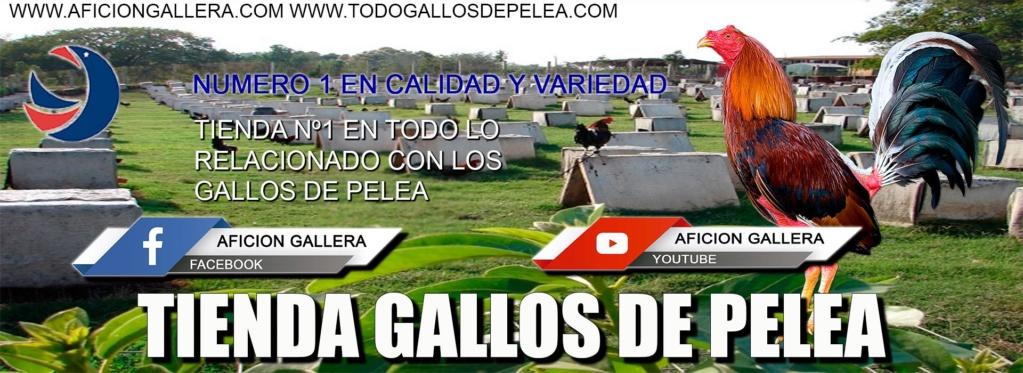 AFICION GALLERA [ gallos de pelea ]
