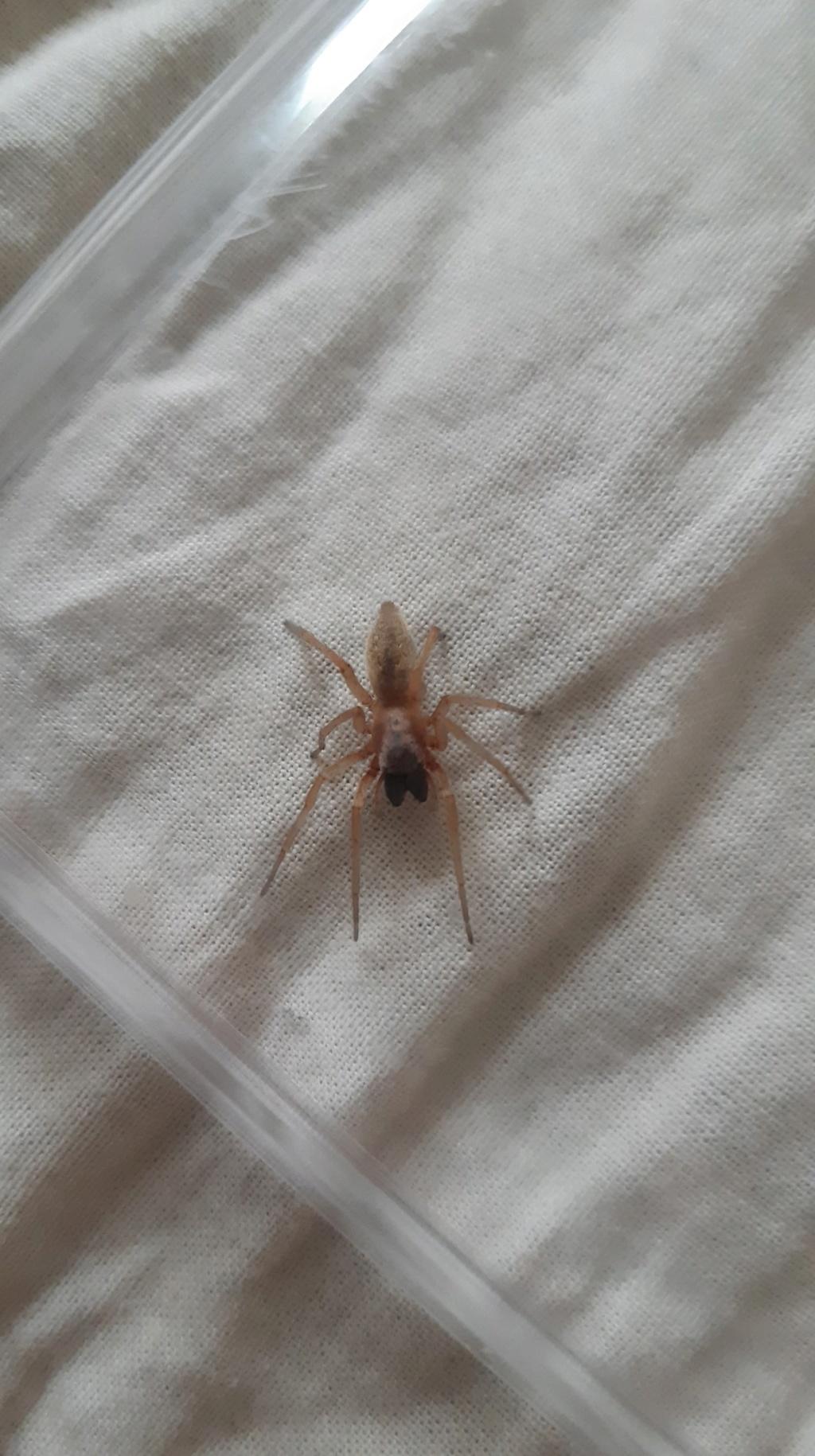 Identification d'une araignée 67512910