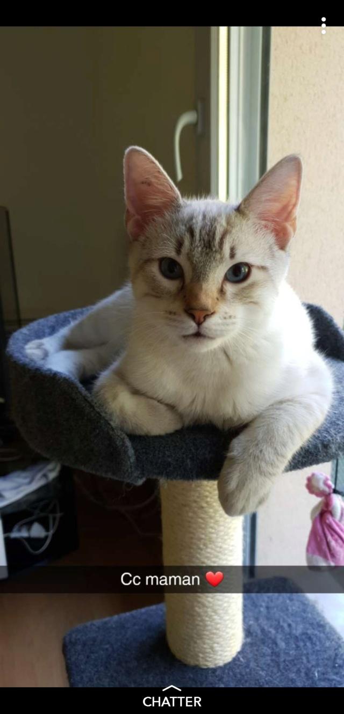 ORPHEE, chaton mâle, beige Tabby, né le 01/05/18 Screen10