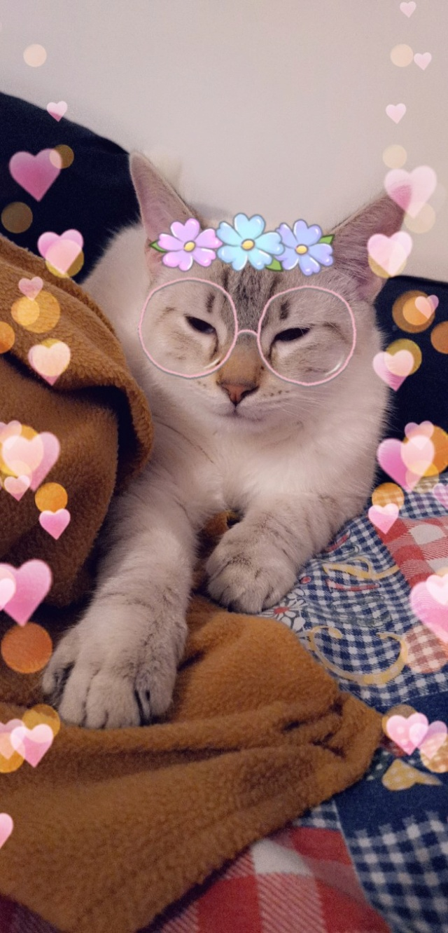 ORPHEE, chaton mâle, beige Tabby, né le 01/05/18 Snapch14