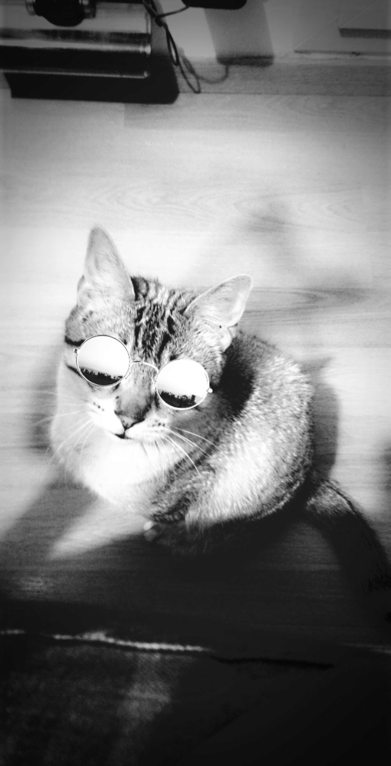 ORPHEE, chaton mâle, beige Tabby, né le 01/05/18 Snapch23