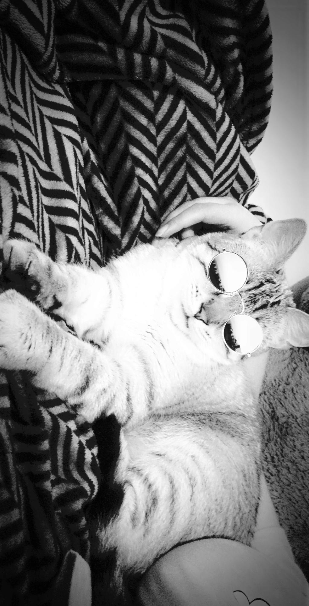 ORPHEE, chaton mâle, beige Tabby, né le 01/05/18 Snapch24