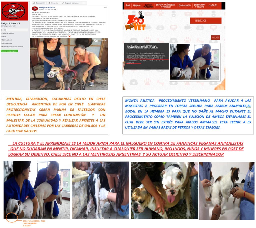 MONTA ASISTIDA - DESMINTIENDO A PAGINA ARGENTINA EN CHILE Cruza_10