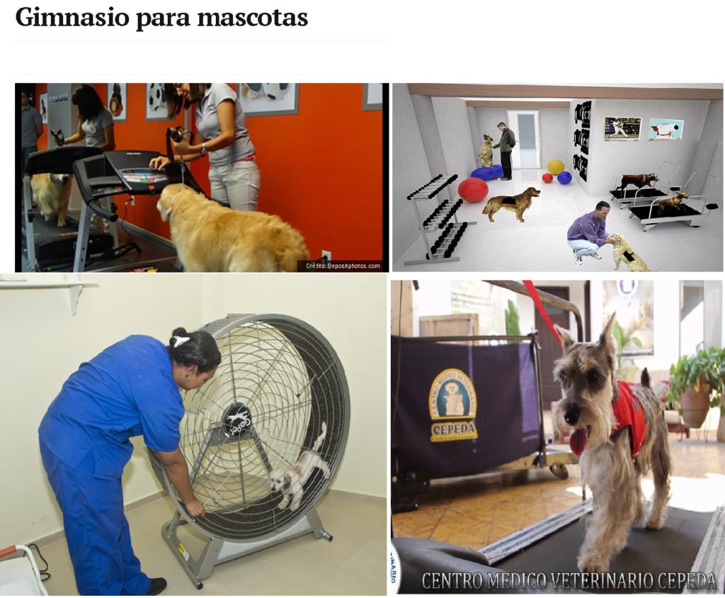 MENTIRAS MAS REPETIDAS DE LA DOCTRINA  VEGANA ABOLICIONISTA Gimnas10