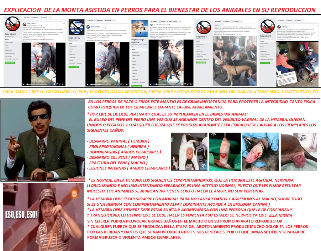 MENTIRAS MAS REPETIDAS DE LA DOCTRINA  VEGANA ABOLICIONISTA Longan10