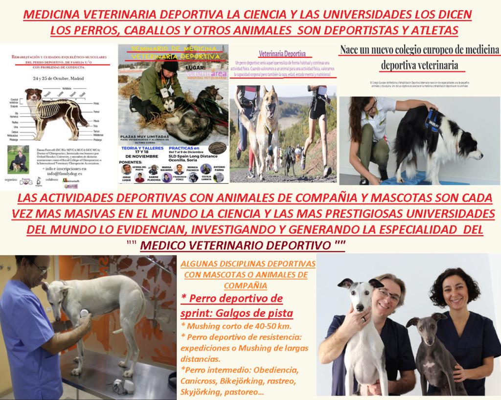 MEDICINA DEPORTIVA VETERINARIA   GREYHOUUN ATLETAS Medici10