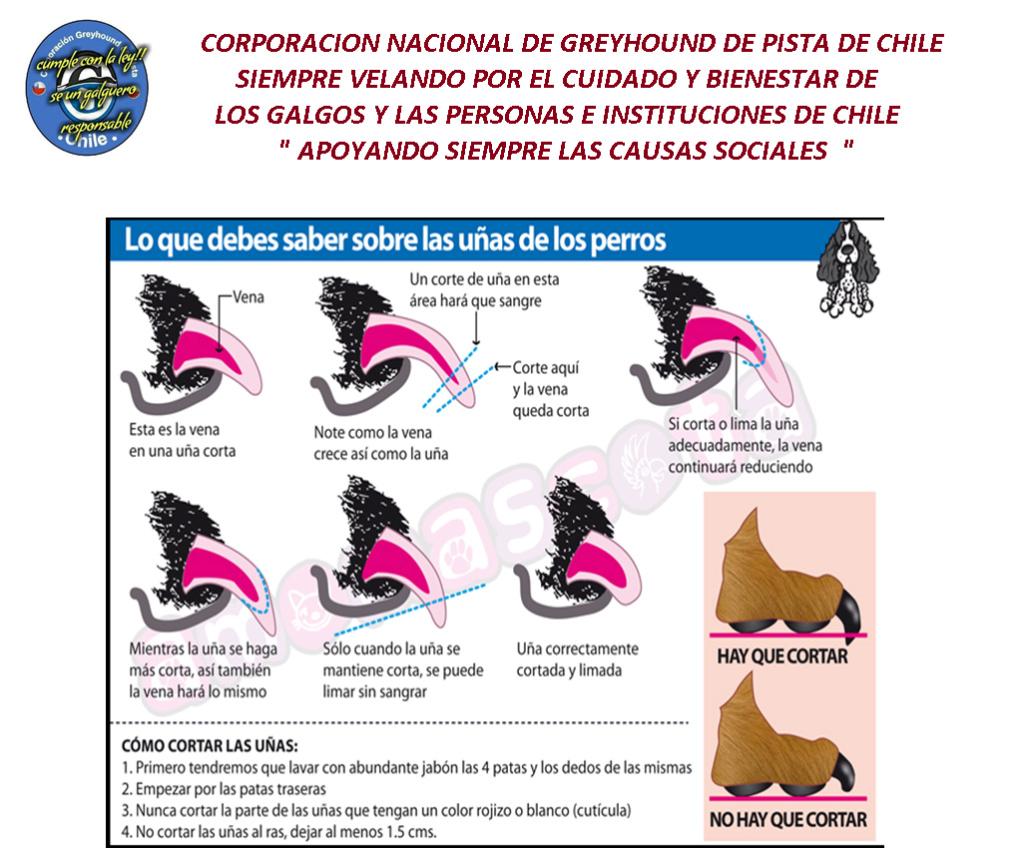 CUIDADO Y CORTES DE UÑAS Uzas10