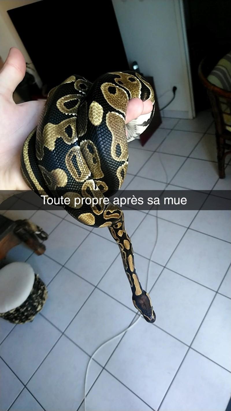 Terrarium de mon python 20180914