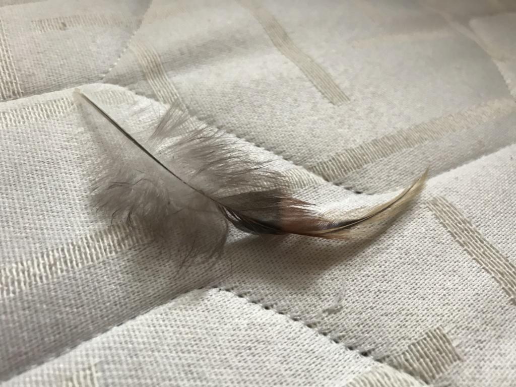 A qui appartient cette plume? Img_2414