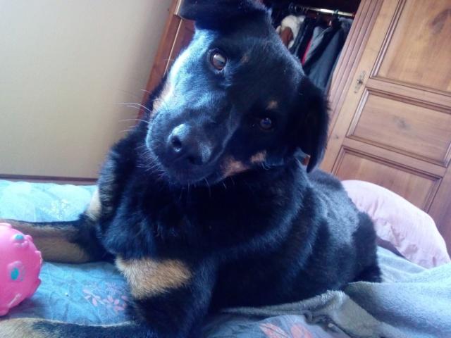 Blackjack - mâle - refuge de Târgu Frumos - réservé adoption (67) 312