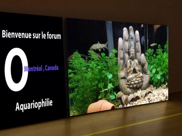 O aquaphile - Montréal , Canda