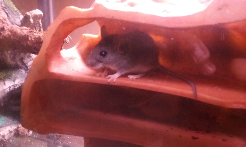 What species is this mouse 20190511