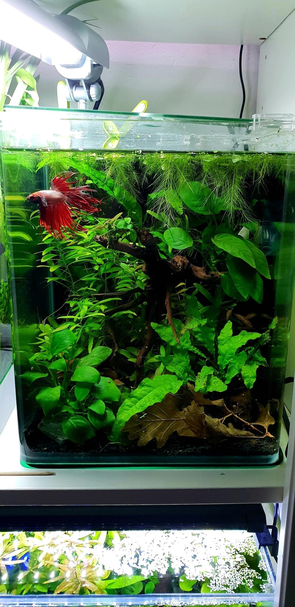 Présentation aquarium d'eau douce  20181213