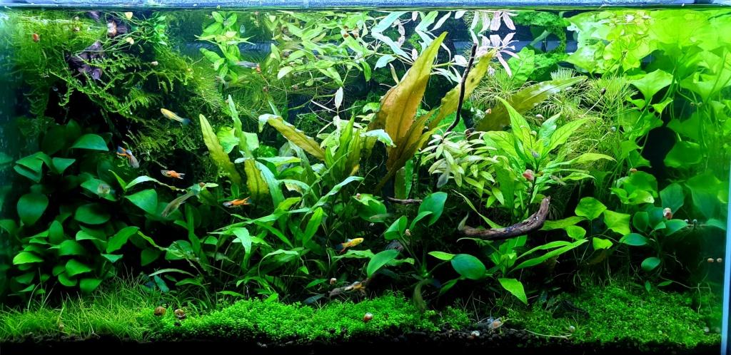 Présentation aquarium d'eau douce  20190511