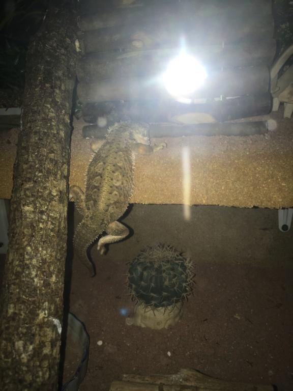 Rituels avec votre reptile  00408e10