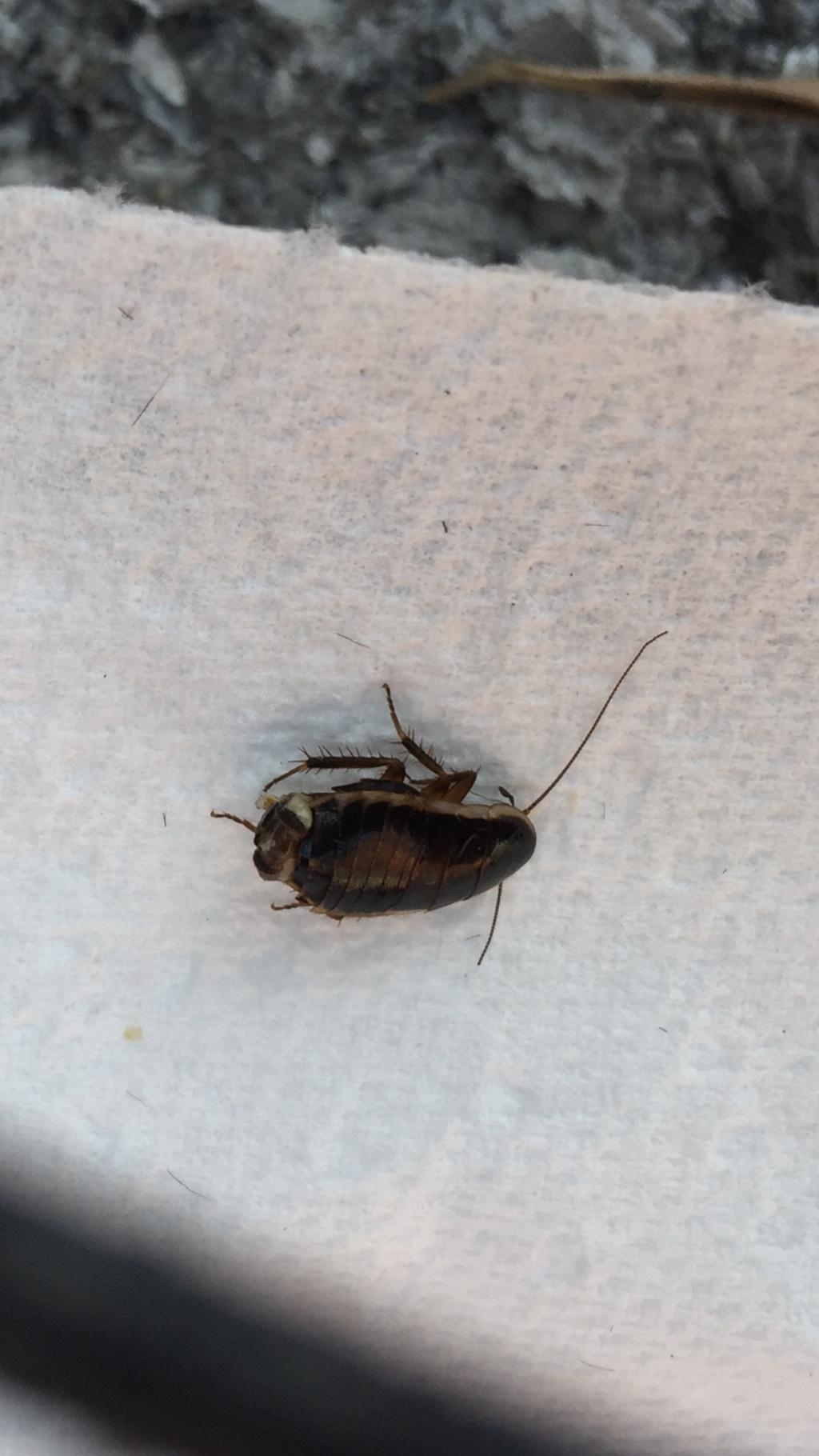De quel insecte s'agit-il? 35e61f10
