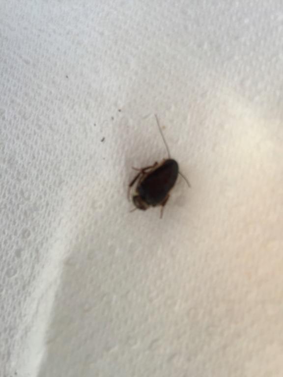 De quel insecte s'agit-il? 93899510