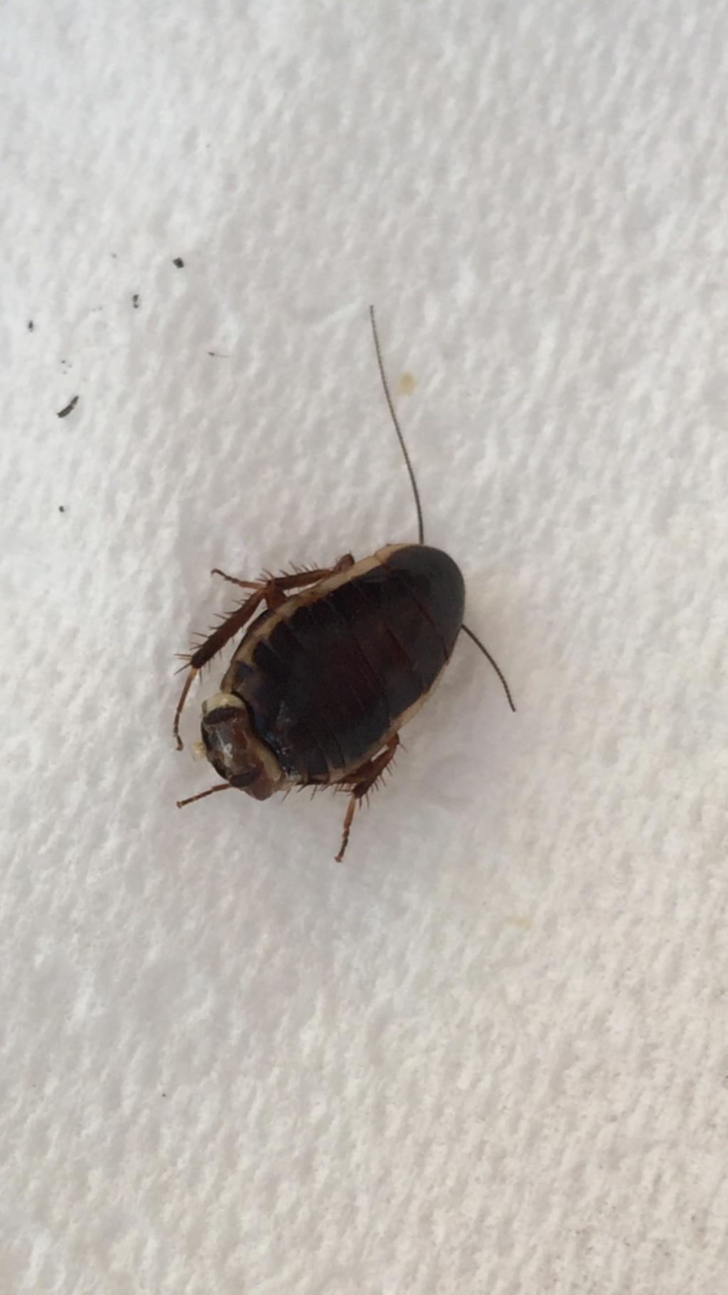 De quel insecte s'agit-il? Abbdd310