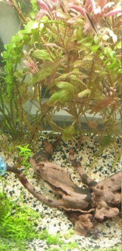 Démarrage aquarium  - Page 3 16052811