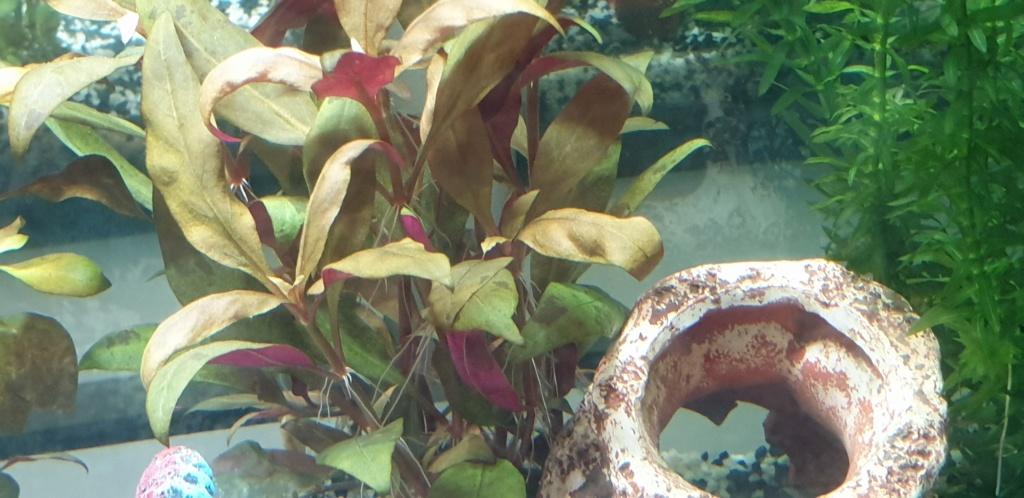 Démarrage aquarium  20200213