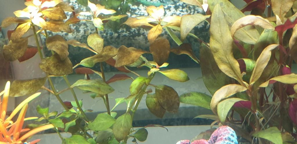 Démarrage aquarium  20200214