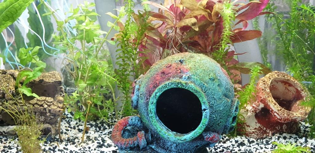 Démarrage aquarium  20200222
