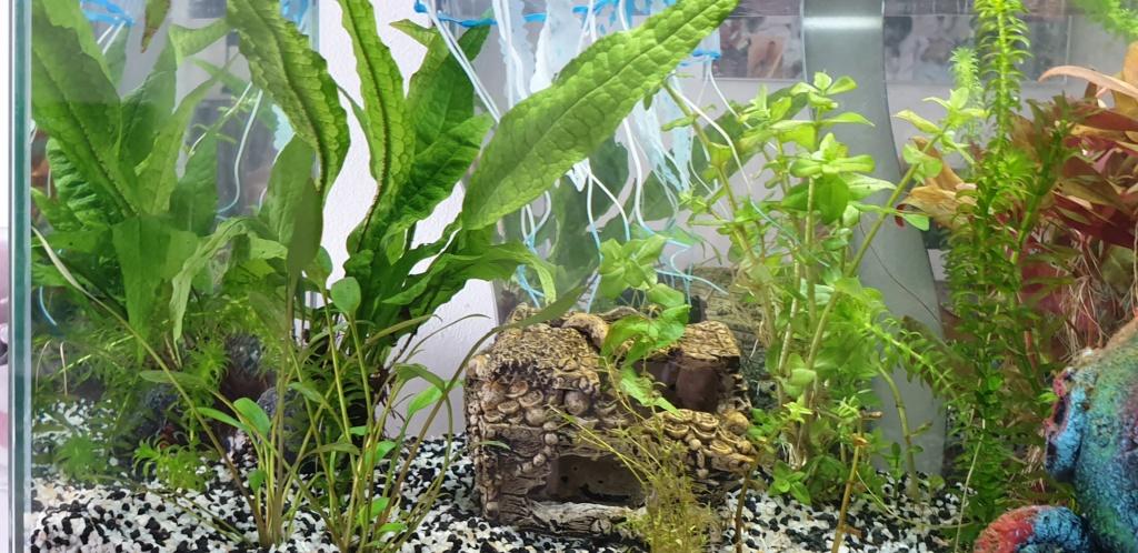 Démarrage aquarium  20200226