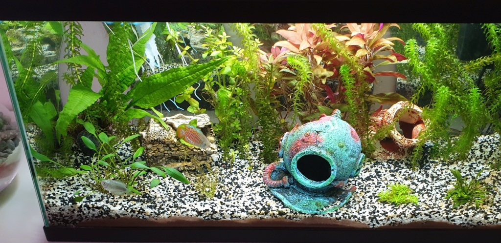 Démarrage aquarium  - Page 2 20200311