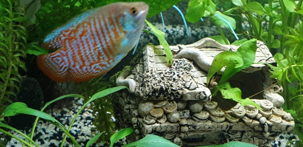 Démarrage aquarium  - Page 3 20200319