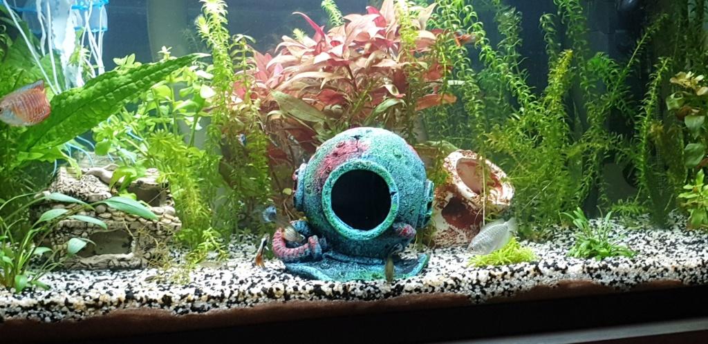 Démarrage aquarium  - Page 3 20200320