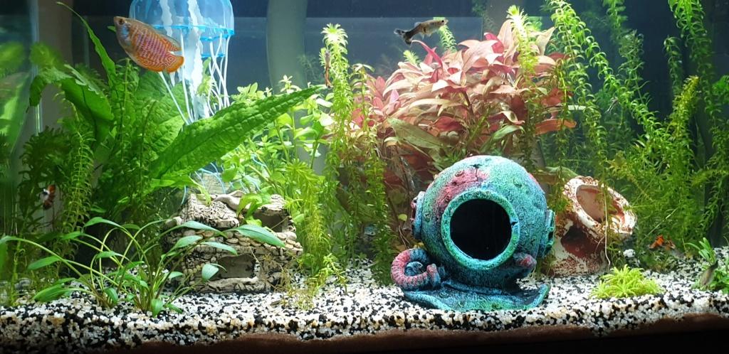 Démarrage aquarium  - Page 3 20200321