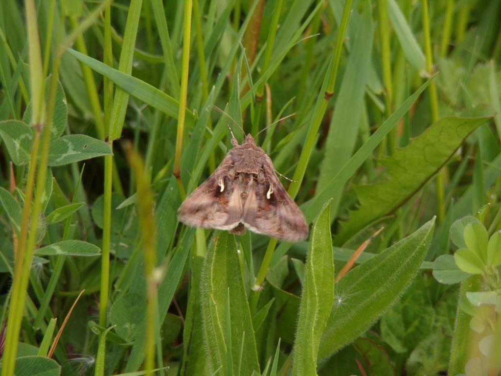 papillon non identifié 100_4815