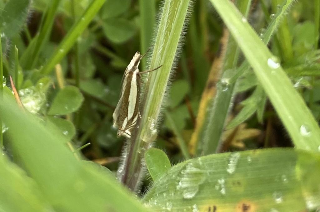insecte non identifié Img_0010