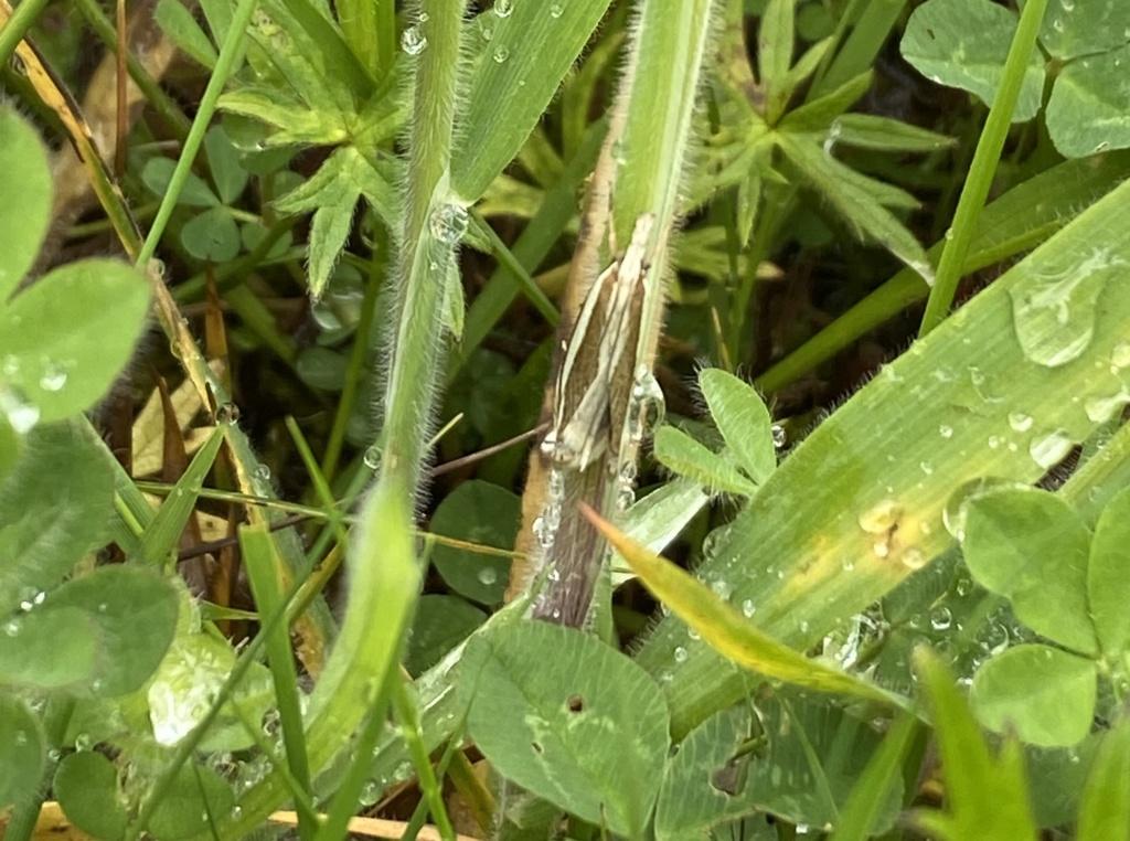 insecte non identifié Img_0011