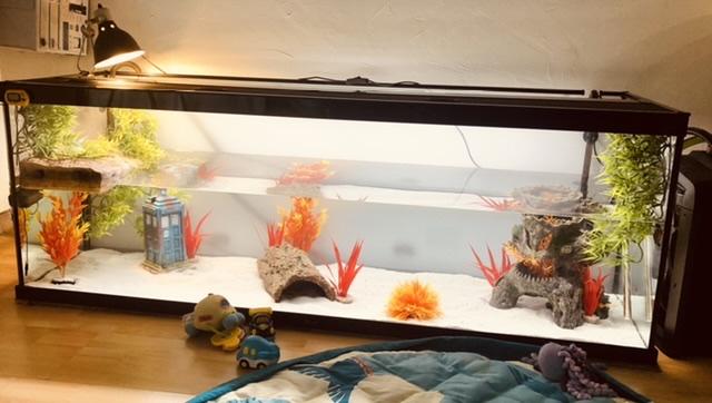Aquarium Smarties emydura subglobosa 33894410