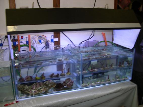 Bourse aux poissons le 14 octobre 2007 à Saint Pathus 02_dsc11