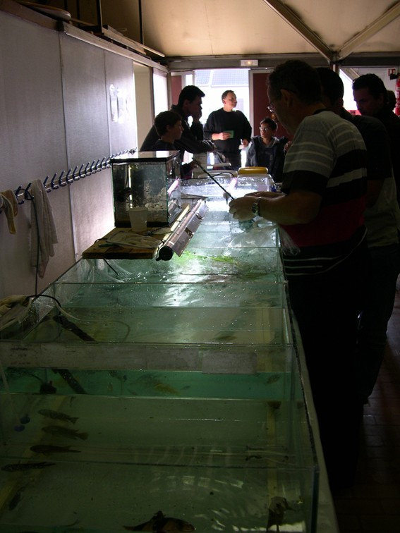 Bourse aux poissons le 14 octobre 2007 à Saint Pathus 04_dsc11
