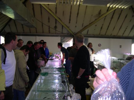 Bourse aux poissons le 14 octobre 2007 à Saint Pathus 11_dsc10