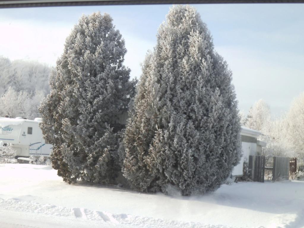 Mon pays......c'est l'hiver.....joualvert! Dscf3023