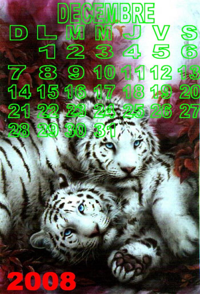 Décembre 2008 Dl96w910