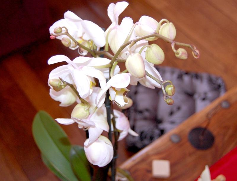 Fleurs ... tout simplement - Page 3 Orc610