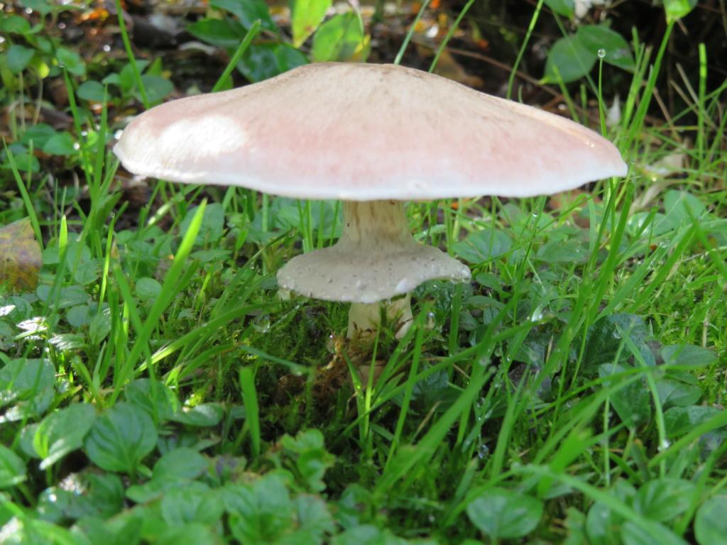 champignons Champi12