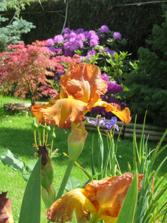 Jardin 2020 ! - Page 5 Fleur_16