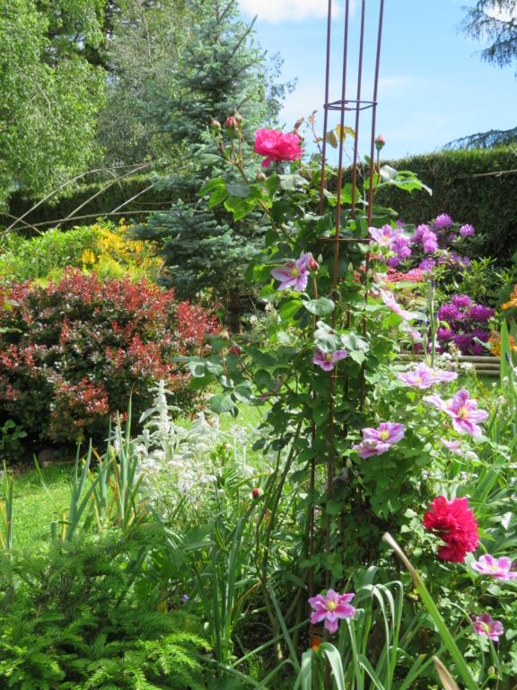 Jardin 2020 ! - Page 5 Fleurs12